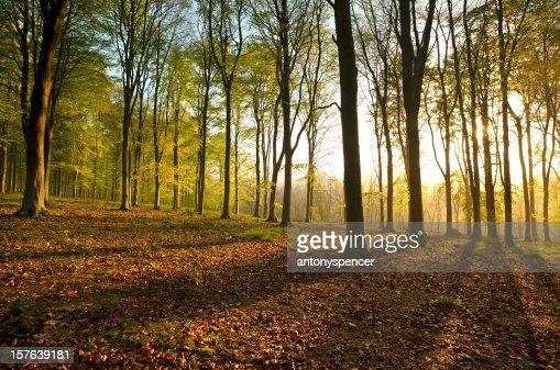 ドーセットの森