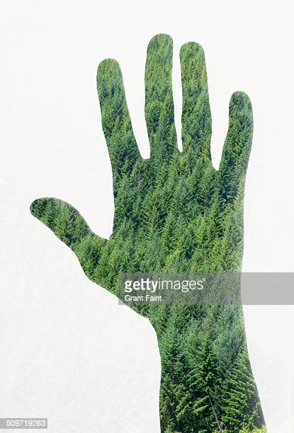 Double exposure: Hand with forest background.