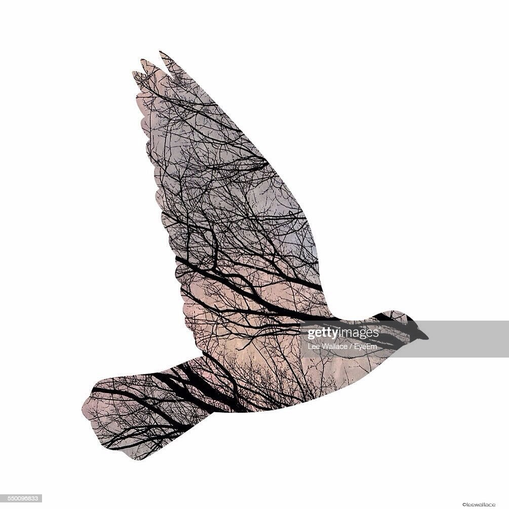 Double Exposure Of Flying Bird And Bare Trees
