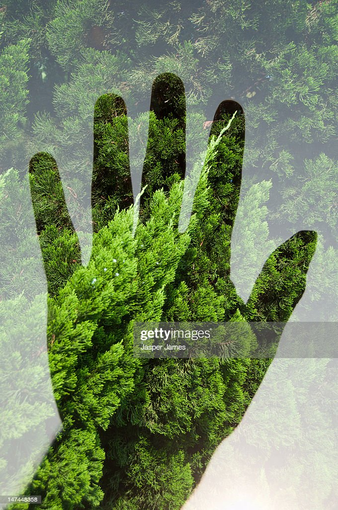 double exposure of hand and trees : Stock Photo