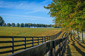 Double fenced, tree lined horse pasture in Fayette County Kentucky near Lexington.