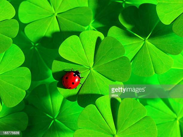 Double Luck - Ladybird and four-leaved clovers