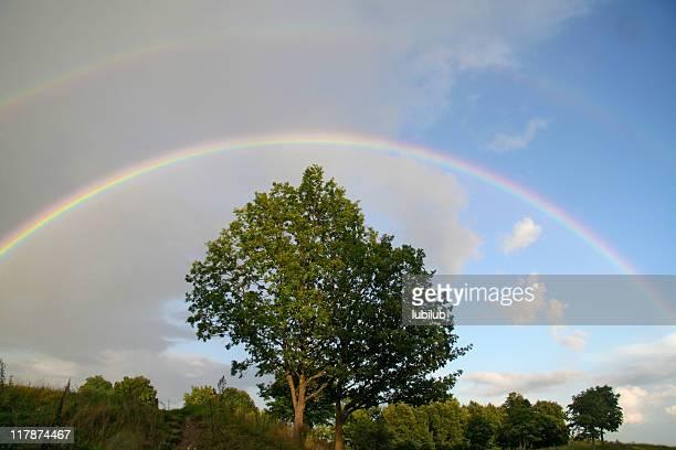 二重の虹の木
