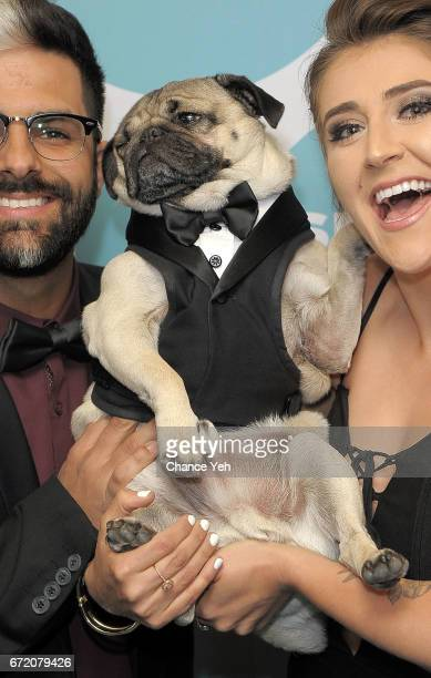Doug the Pug attends 9th Annual Shorty Awards at PlayStation Theater on April 23 2017 in New York City