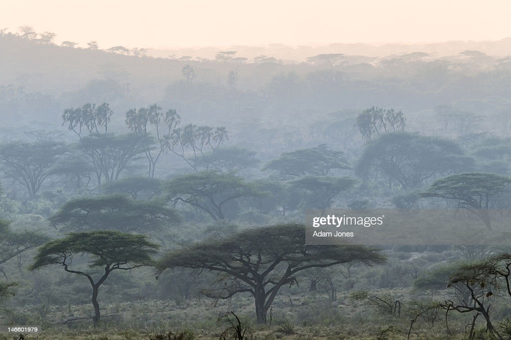 Doum palms and acacia trees in riverine forest : Stock Photo