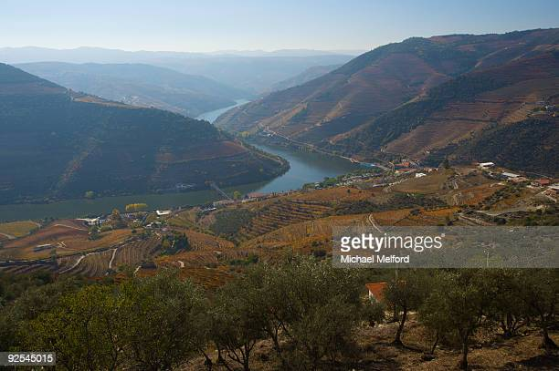 Vineyards on the hills along the Douro River.