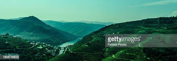 Douro River Vineyards
