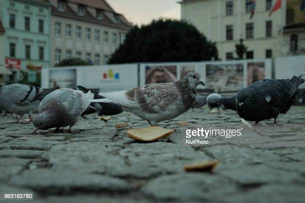 A dove and a piece of stale bread are seen on the Old Market Square on 19 October 2017