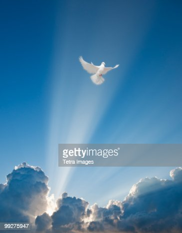 Dove and clouds