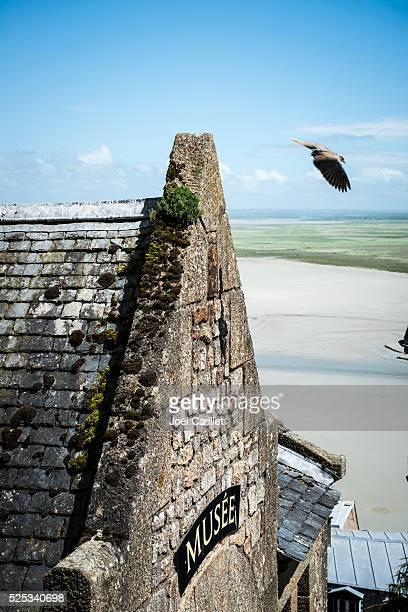Dove at Mont Saint-Michel, France