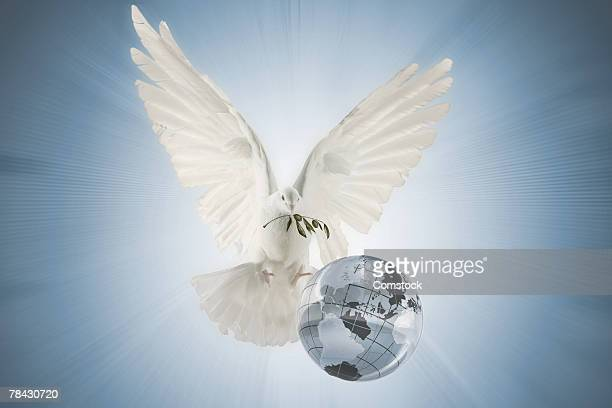 Dove carrying olive branch over globe