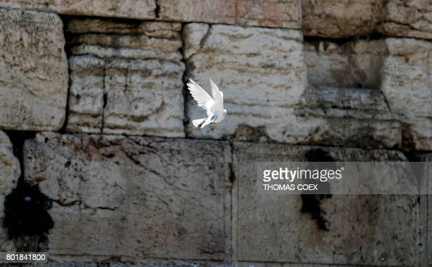 A dove flies by the Western Wall the most holy site where Jews can pray in Jerusalem's Old City on June 27 2017 Israel's shelving of a deal to allow...