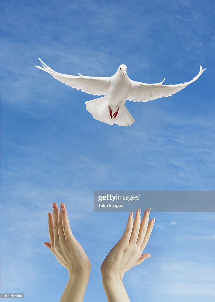 Dove flying above raised hands
