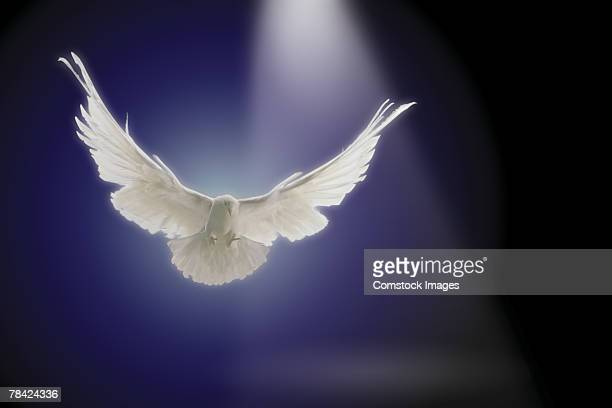 Dove flying through beam of light
