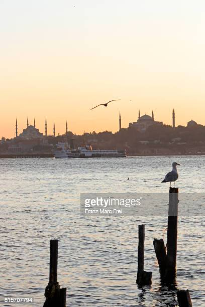 Dove on a rotten pier, Port of Istanbul, View at Sulatanahmet with Blue Mosque and Hagia Sophia