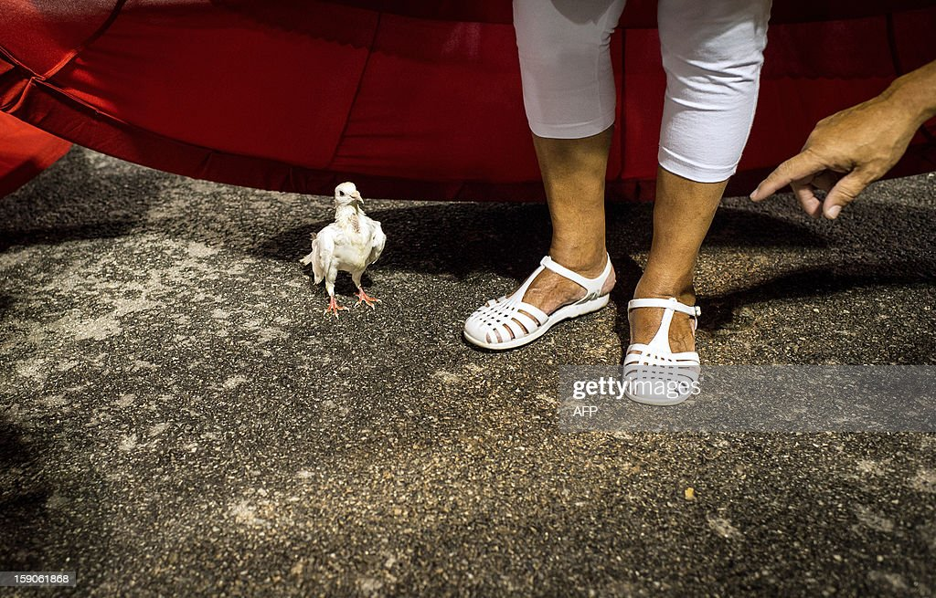 A dove remains under a dancer's costume during the rehearsal of X-9 Paulistana samba school at the Sambadrome in Sao Paulo, Brazil, on January 5, 2013. Sao Paulo's carnival is scheduled for February 8 and 9 and Rio de Janeiro's will be on February 10 and 11. AFP PHOTO/YASUYOSHI CHIBA