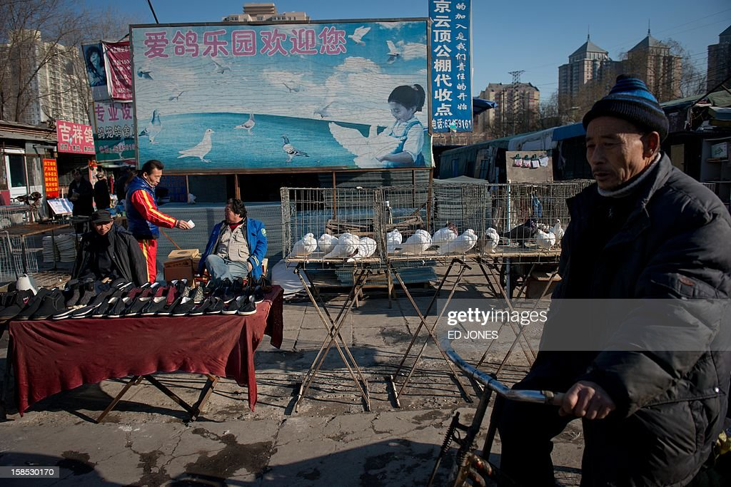 Doves are displayed for sale at a pigeon market in Beijing on December 18, 2012. The market was once the city's largest until plans were announced to demolish the area to make way for an office development. Vendors, who pay around 0.4 Yuan (0.06 USD) per square metre, according to state media, offer a variety of pigeon-fancying paraphernalia and other animals including rabbits, dogs, and crickets. AFP PHOTO / Ed Jones