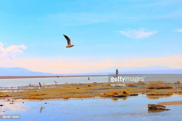 Doves bird flying to freedom - Salar de Uyuni at sunrise - Turquoise lake at dramatic sky, Idyllic Atacama Desert, Altiplano landscape panorama – Potosi region - Bolivian Andes, Chile, Bolívia and Argentina border