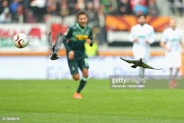 Doves fly over the field of play during the Bundesliga match between FC Augsburg and Borussia Moenchengladbach at WWK Arena on February 28 2016 in...
