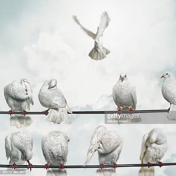 Doves perched on wires, one flying away (Digital Composite)