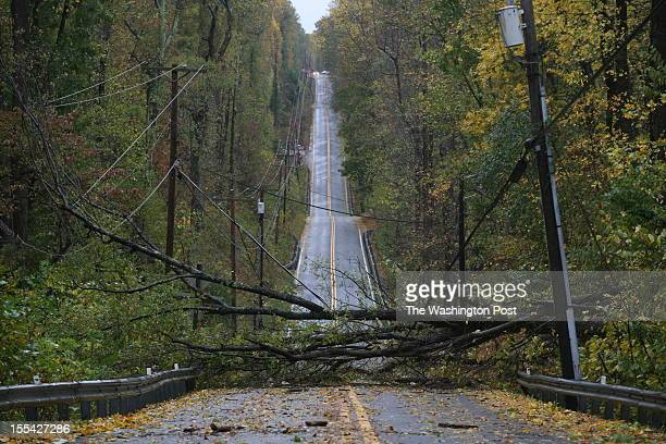 A downed tree and power lines block Rt 261 in Calvert County just south of Chesapeake Beach on Tuesday morning in the wake of Hurricane Sandy in...