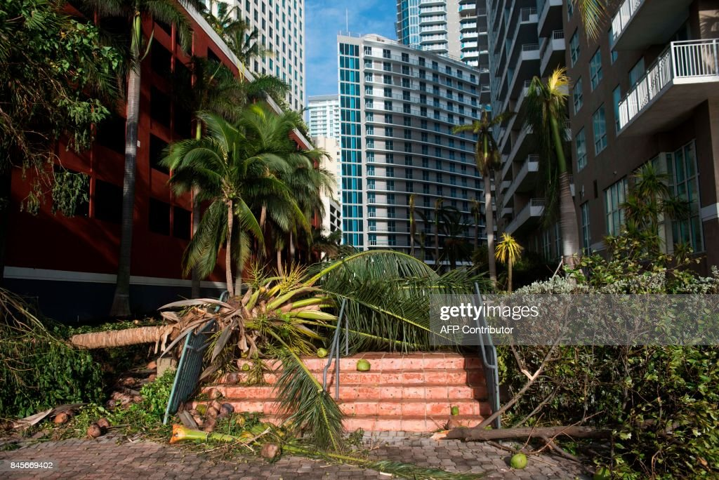 A downed tree caused by Hurricane Irma blocks a pedestrian walkway in downtown Miami, Florida, September 11, 2017. /