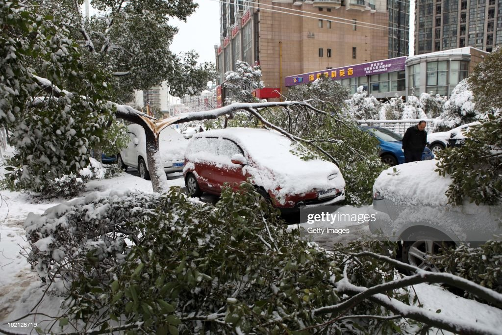 Downed trees are seen after a snowfall on February 19, 2013 in Nanjing, China. Heavy snow hit large areas of east China on Tuesday.