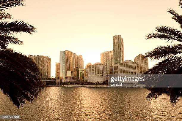 Downtown Miami skyline featuring the water and palm trees