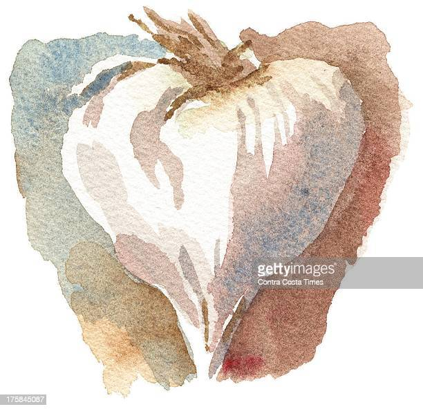 USA 2013 300 dpi Dave Johnson illustration of a garlic bulb