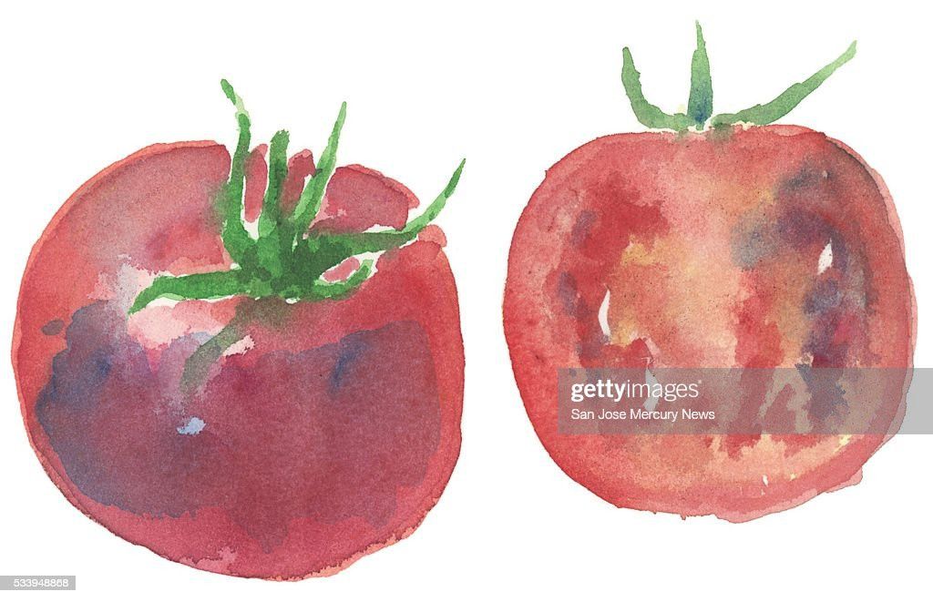 USA - 2016 300 dpi Dave Johnson illustration of tomatoes.