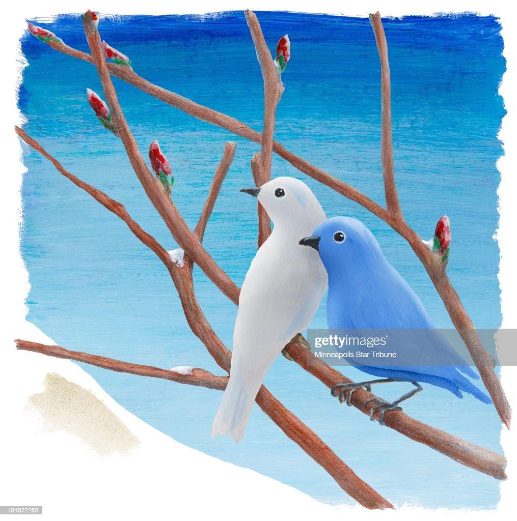 USA - 2014 300 dpi Eddie Thomas illustration of spring birds.
