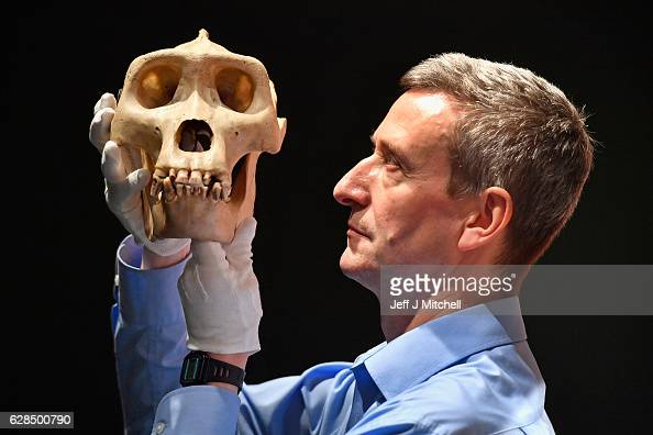 Dr Andrew Kitchner curator holds the skull of a Gorilla during a press preview for a new taxidermy exhibition on December 8 2016 in Edinburgh...