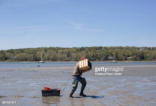 Dr Brian Beal carries recruitment boxes which are experiment boxes invented by Dr Beal to their next experiment location on the mudflats of the...