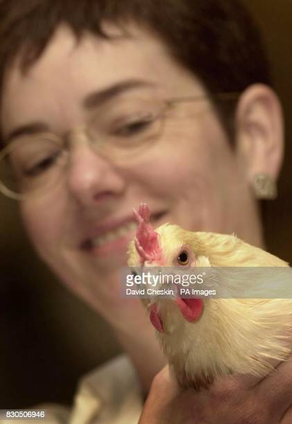 Dr Helen Sang holds a chicken during a press conference at the Roslin Institute Edinburgh Sang announced a joint project with United States company...