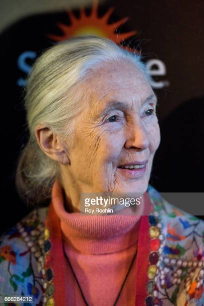 Dr Jane Goodall attends Disneynature with the Cinema Society host the premiere of 'Born in China' at Landmark Sunshine Cinema on April 8 2017 in New...