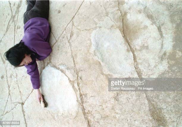 Dr Jo Wright a Palaeontologist from Bristol University scrubs one of the huge Dinosaur footprints possibly from a Brachiosaurus that have been found...