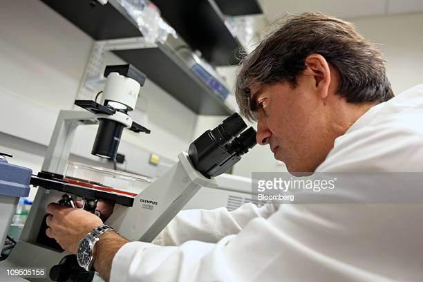 Dr Leonidas C Platanias views cancer cells through a microscope in the cancer research lab at the Robert H Lurie Medical Research Center of...