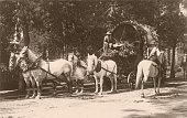Draft Horses Pulling Flowercovered Wagon