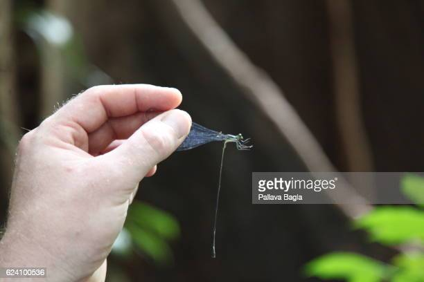 A dragon fly French Guiana is haven for plants and animals with ninety percent of the area under tropical rainforests the country has about 1064...
