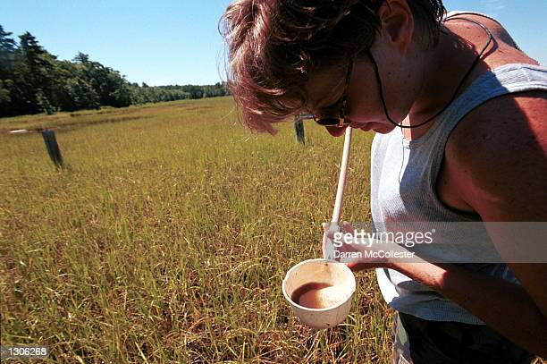 Dragon Mosquito Control Inc employee Kelly Williams looks at a cup July 21 2000 filled with mosquito larvae taken from a salt marsh in Stratham NH...