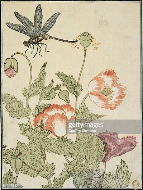 Dragonfly and Poppies from Insect Book by Kitagawa Utamaro