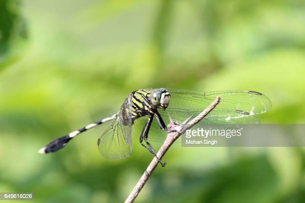 Dragonfly at Asola Bhatti Wildlife Sanctuary, Asola, Delhi