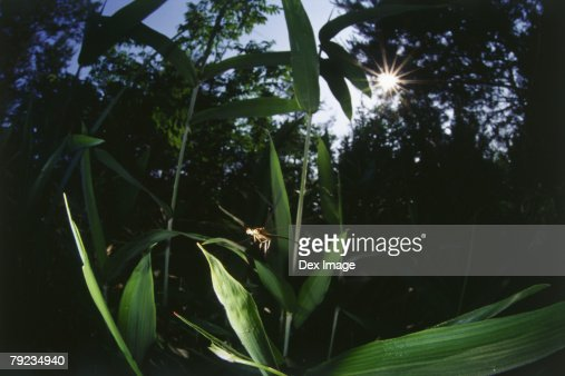 Dragonfly in flight among leaves : Stock Photo