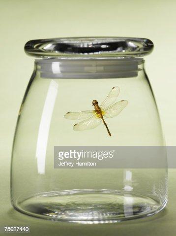 Dragon-fly in jar
