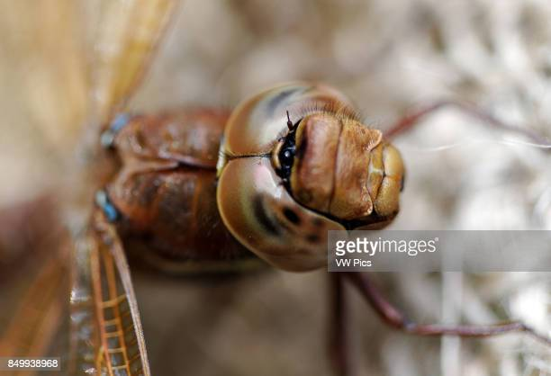 A dragonfly is an insect belonging to the order Odonata the suborder Epiprocta or in the strict sense the infraorder AnisopterA It is characterized...