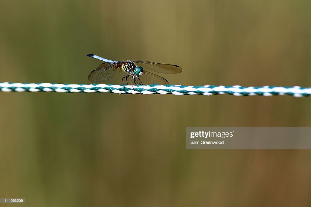 A dragonfly is seen during a practice round prior to the start of THE PLAYERS Championship held at THE PLAYERS Stadium course at TPC Sawgrass on May 9, 2012 in Ponte Vedra Beach, Florida.
