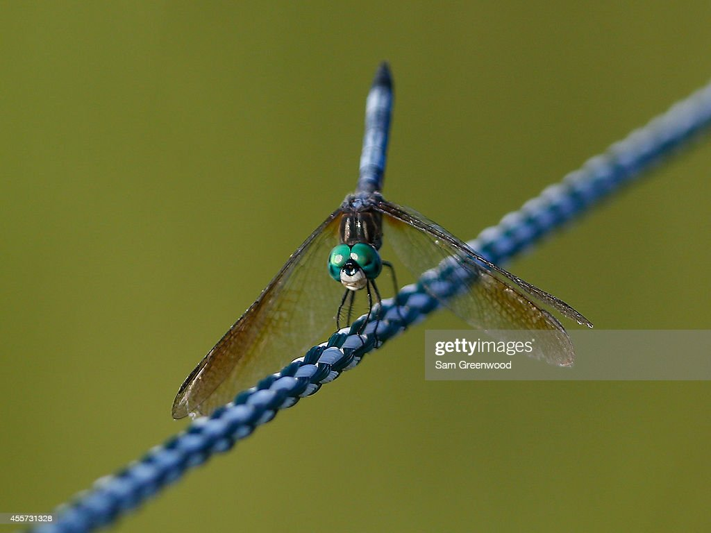 A dragonfly lands on a rope during the second round of the Yokohama Tire LPGA Classic at the Robert Trent Jones Golf Trail at Capitol Hill Senator Course on September 19, 2014 in Prattville, Alabama.