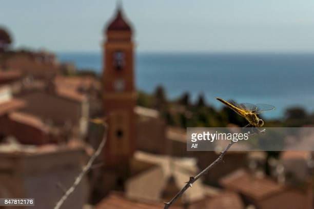 Dragonfly on Roquebrune, French Riviera, France
