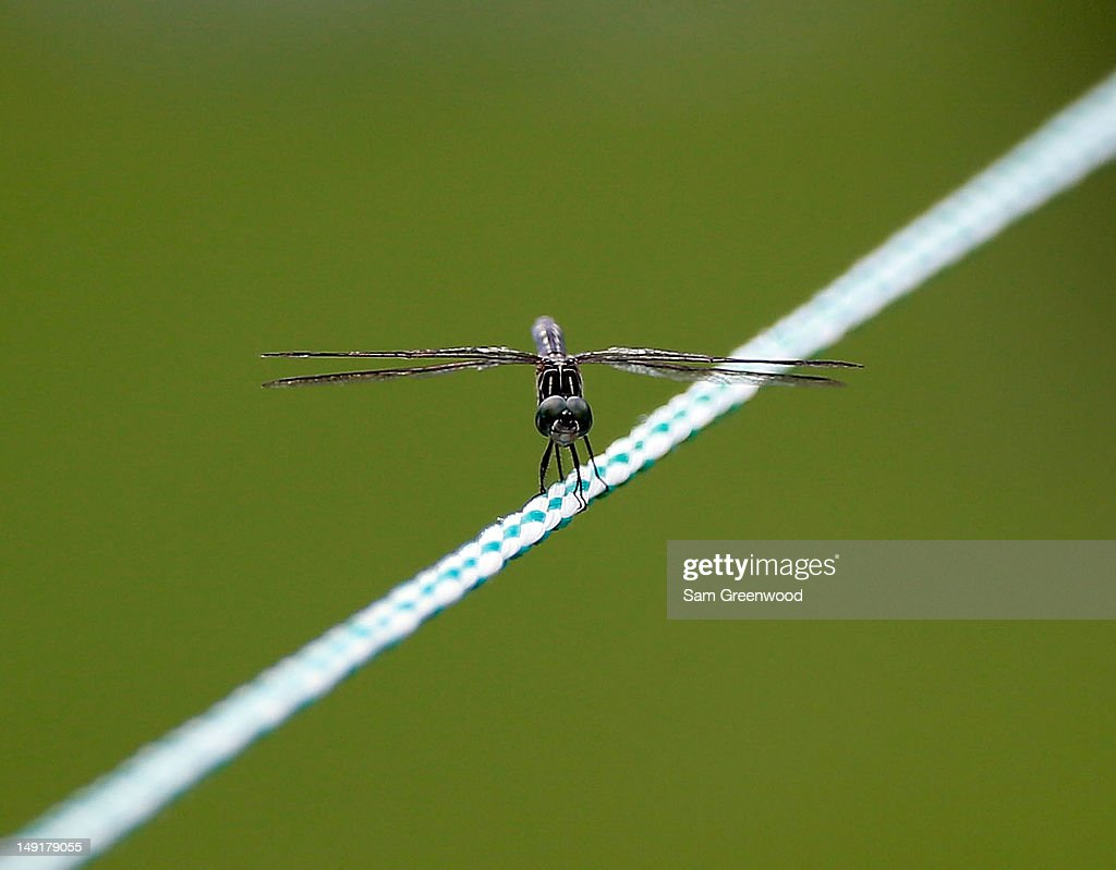 A dragonfly sits on a rope during the final round of the True South Classic at Annandale Golf Club on July 22, 2012 in Madison, Mississippi.