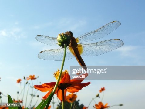 Dragonfly under the blue sky